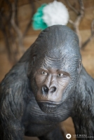 decor gorilla